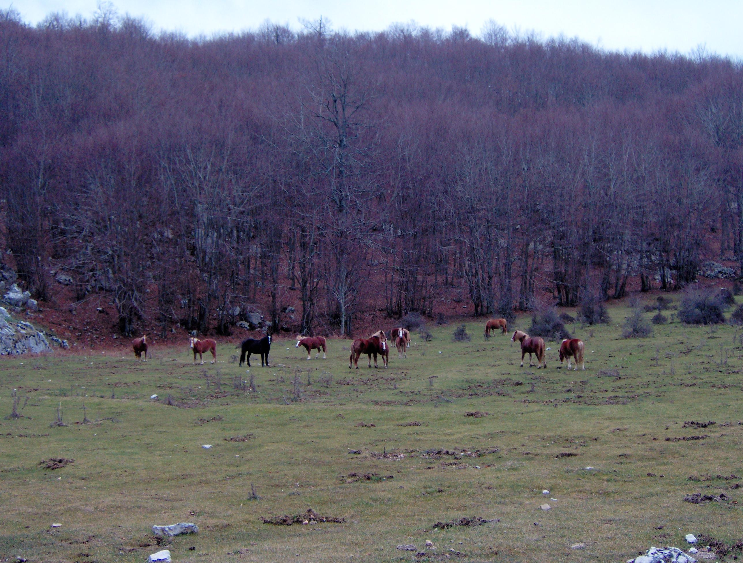 Località Piano della Fontana - Cavalli al pascolo